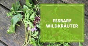 Autarkie_essbare_Wildkräuter