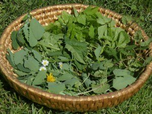 Wildkräuter Outdoorküche | Gesammelte Wildkräuter