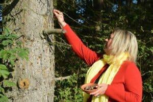 Rechtliche Grundlagen und der Umgang mit Harzen und Baumsäften