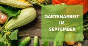 Gartenarbeit_September_Gartenjahr_Garten_Selbstversorgung_Selbstversorger_Autarkie