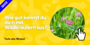 Wildkraeuter_quiz_test_wildkraeuterwissen