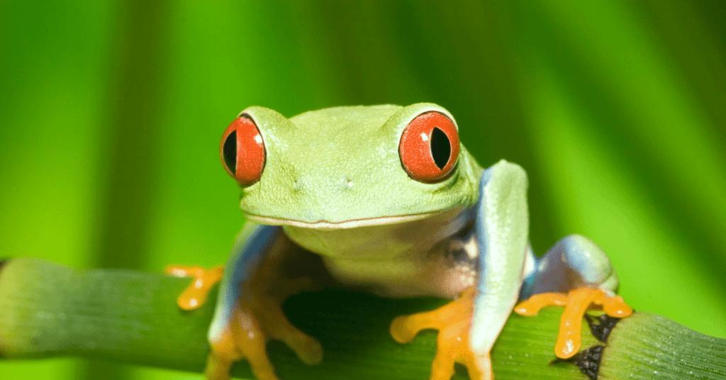 Zeitmanagement_Eat_the_frog_Methode_Technik