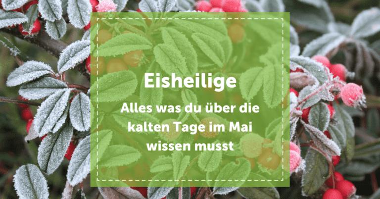 blog_eisheilige_frost_gefroren_bauernregel_alles_was_du_wissen_musst