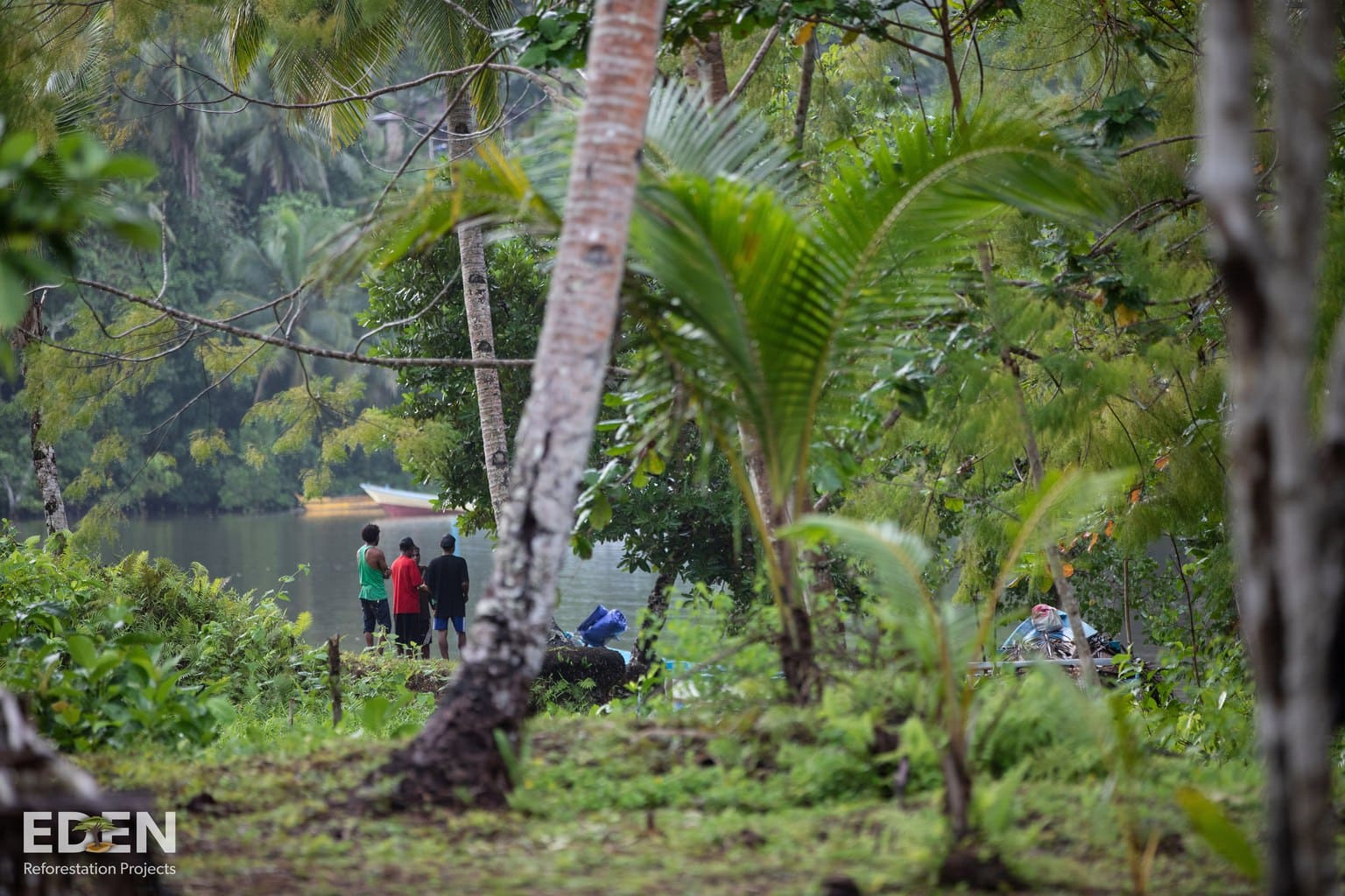 Indonesien_projekt_land_bäume_pflanzen