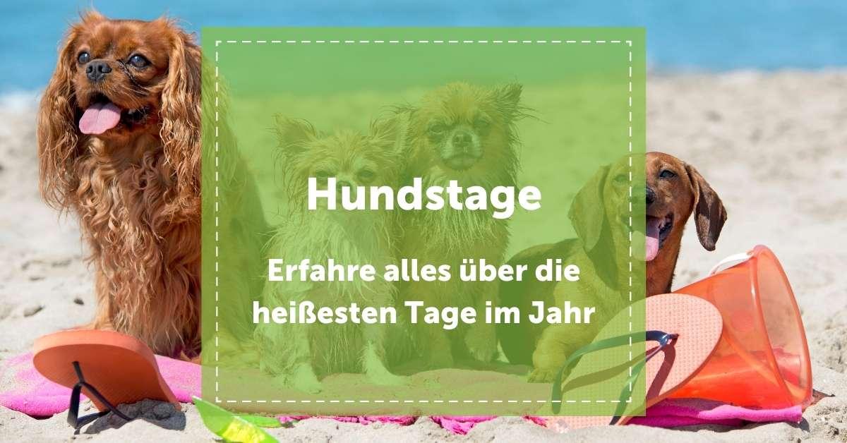 hundstage_2021_blog_heißesten_tage_im_jahr_hitze_juli_august