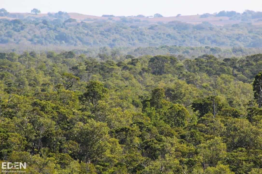 kenia_bäume_eden_reforestation_projects